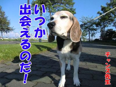 チャンスとティアラ+ココ-20120529-8-400.jpg