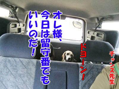 チャンスとティアラ+ココ-20120530-3-400.jpg