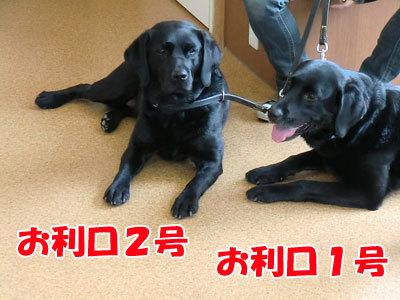 チャンスとティアラ+ココ-20120530-6-400.jpg