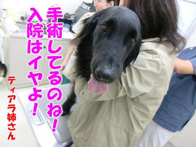 チャンスとティアラ+ココ-20120530-9-400.jpg
