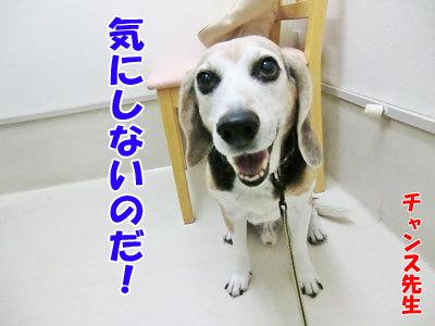 チャンスとティアラ+ココ-20120530-14-400.jpg