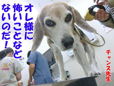 チャンスとティアラ+ココ-20120530-18-400.jpg