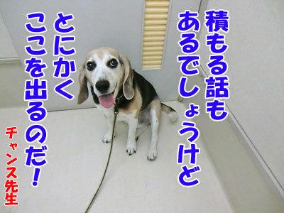 チャンスとティアラ+ココ-20120530-20-400.jpg