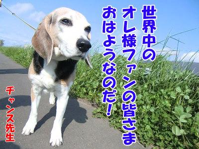 チャンスとティアラ+ココ-20120601-1-400.jpg