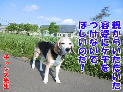 チャンスとティアラ+ココ-20120601-2-400.jpg