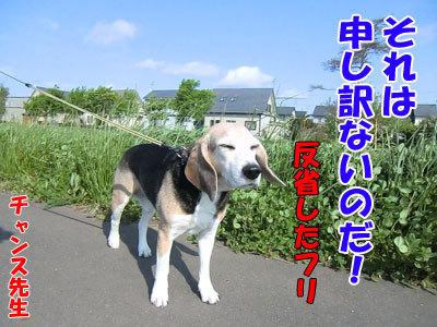チャンスとティアラ+ココ-20120601-3-400.jpg
