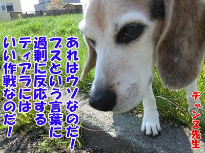 チャンスとティアラ+ココ-20120601-8-400.jpg