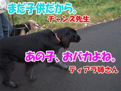 チャンスとティアラ+ココ-20101104-6-400.jpg
