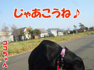 チャンスとティアラ+ココ-20101108-4-400.jpg