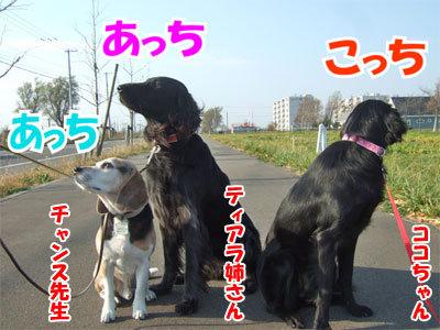チャンスとティアラ+ココ-20101108-5-400.jpg