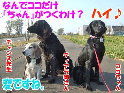 チャンスとティアラ+ココ-20101108-6-400.jpg