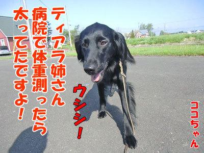 チャンスとティアラ+ココ-20120604-2-400.jpg