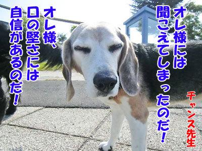 チャンスとティアラ+ココ-20120604-4-400.jpg