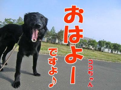 チャンスとティアラ+ココ-20120606-2-400.jpg