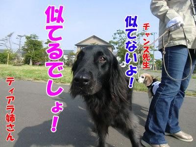 チャンスとティアラ+ココ-20120606-5-400.jpg