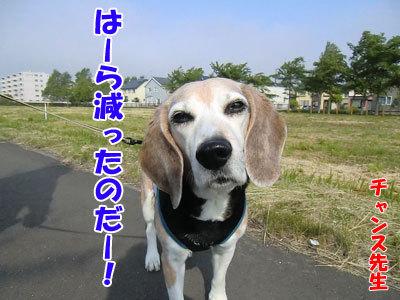 チャンスとティアラ+ココ-20120606-6-400.jpg