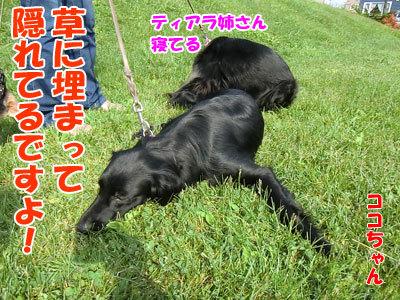 チャンスとティアラ+ココ-20120606-8-400.jpg
