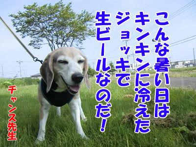 チャンスとティアラ+ココ-20120607-1-400.jpg