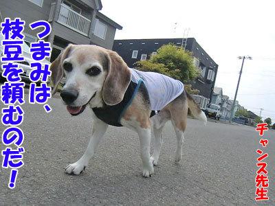 チャンスとティアラ+ココ-20120607-4-400.jpg