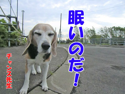 チャンスとティアラ+ココ-20120608-1-400.jpg
