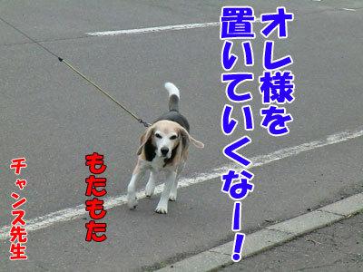 チャンスとティアラ+ココ-20120608-2-400.jpg