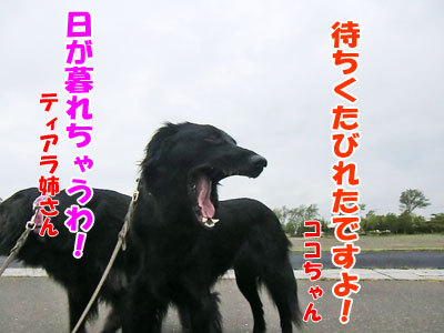 チャンスとティアラ+ココ-20120608-3-400.jpg