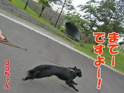 チャンスとティアラ+ココ-20120608-5-400.jpg