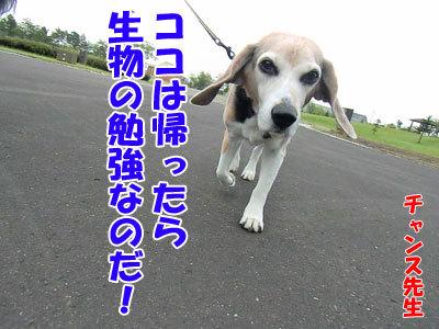 チャンスとティアラ+ココ-20120608-9-400.jpg