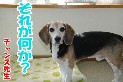 チャンスとティアラ+ココ-20101112-1-400.jpg