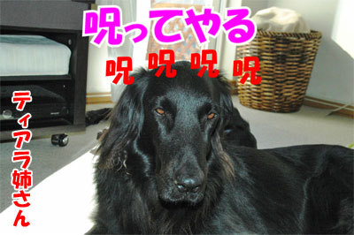 チャンスとティアラ+ココ-20101112-4-400.jpg