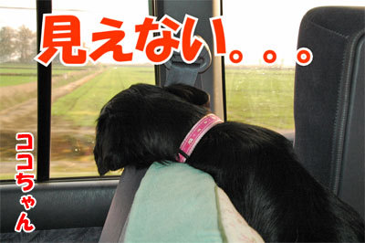 チャンスとティアラ+ココ-20101112-13-400.jpg
