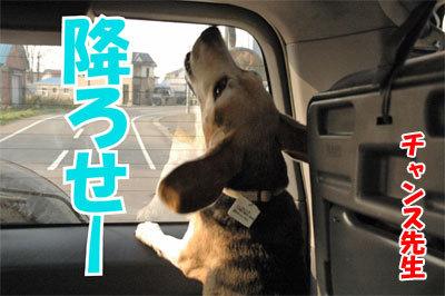 チャンスとティアラ+ココ-20101112-14-400.jpg