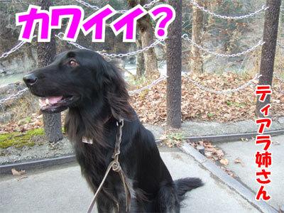 チャンスとティアラ+ココ-20101112-15-400.jpg