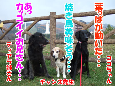 チャンスとティアラ+ココ-20101112-17-400.jpg