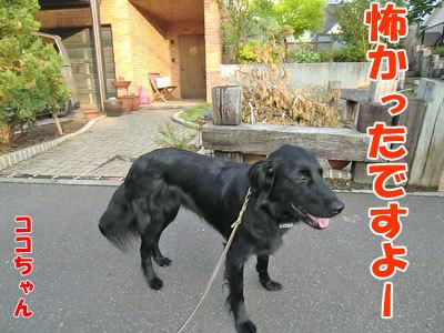チャンスとティアラ+ココ-20120611-1-400.jpg