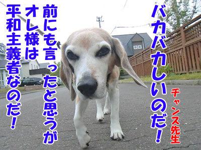チャンスとティアラ+ココ-20120611-4-400.jpg