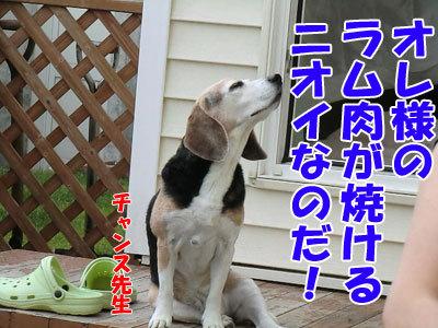 チャンスとティアラ+ココ-20120612-1-400.jpg