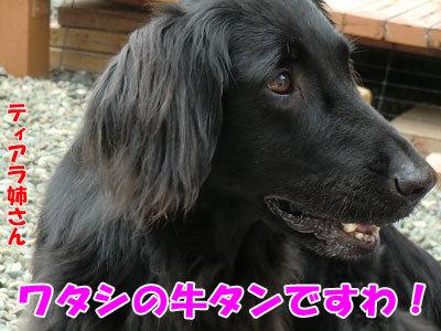 チャンスとティアラ+ココ-20120612-2-400.jpg