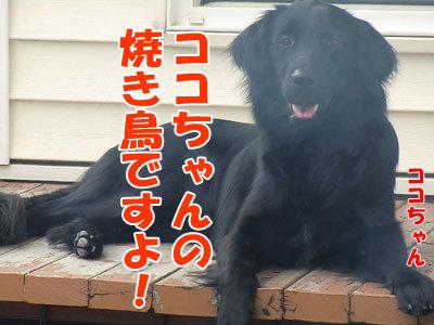 チャンスとティアラ+ココ-20120612-3-400.jpg