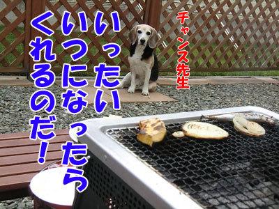 チャンスとティアラ+ココ-20120612-4-400.jpg