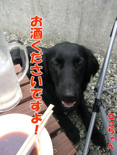 チャンスとティアラ+ココ-20120612-6-400.jpg