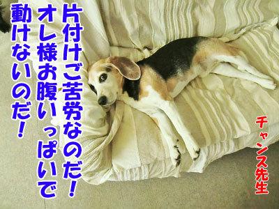 チャンスとティアラ+ココ-20120612-10-400.jpg