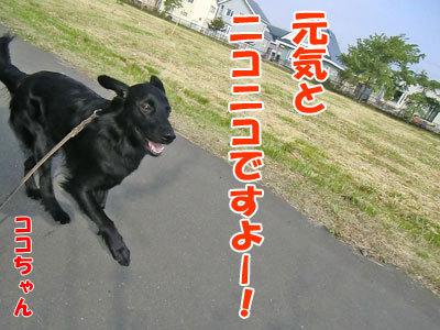 チャンスとティアラ+ココ-20120613-1-400.jpg