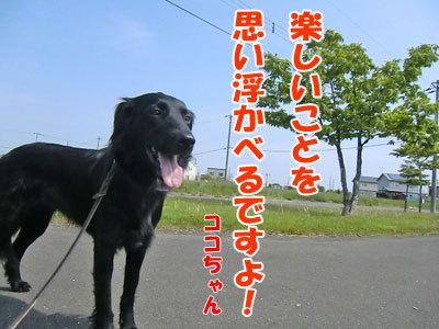 チャンスとティアラ+ココ-20120613-2-400.jpg