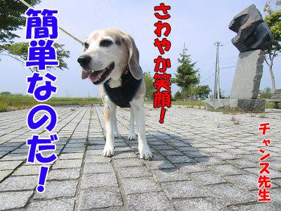 チャンスとティアラ+ココ-20120613-3-400.jpg