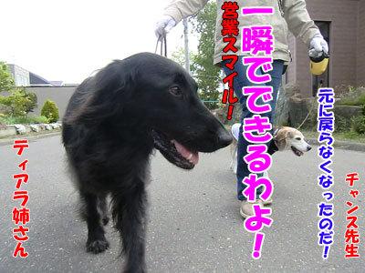 チャンスとティアラ+ココ-20120613-4-400.jpg