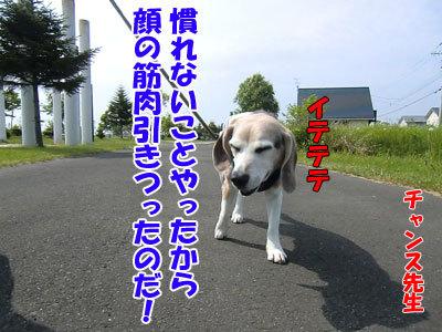チャンスとティアラ+ココ-20120613-5-400.jpg