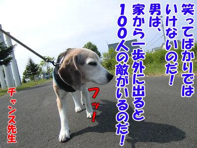 チャンスとティアラ+ココ-20120613-6-400.jpg