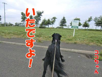チャンスとティアラ+ココ-20120614-1-400.jpg