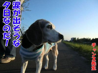 チャンスとティアラ+ココ-20120615-1-400.jpg
